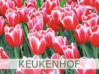 Keukenhof tulip flower expo garden Netherlands