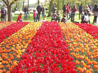 Keukenhof tulip park and botanical garden in Netherlands