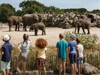 Dutch animal safari park in Netherlands