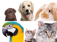 Dutch online dog cat pet food supplies store Netherlands