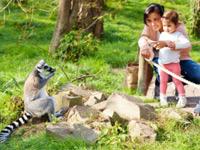Dierenrijk animal park zoo near Eindhoven Netherlands