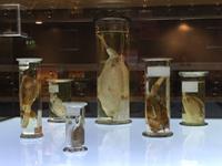 exhibit at Naturalis museum in Leiden Netherlands