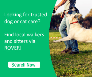 Netherlands dog cat care services
